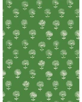 Agapanthus Emerald