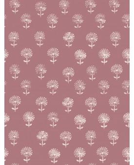 Agapanthus Pink Ink