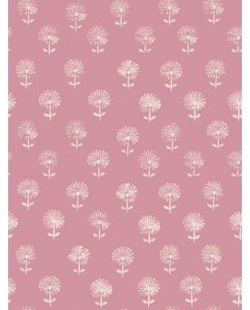 Agapanthus Pink Lemonade