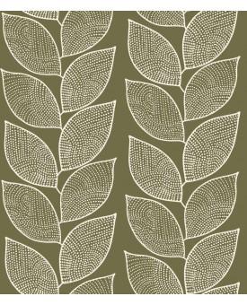 Beanstalk Fern